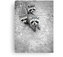 Which One Is The Cutest? Canvas Print