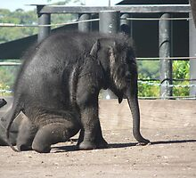 Baby Elephant Antics by louisegreen