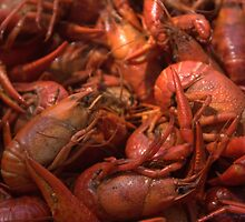Our Mud Bugs. by Tim Bell