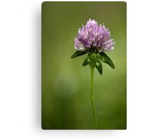 Clover in Springtime Canvas Print