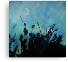 song of the grass Canvas Print