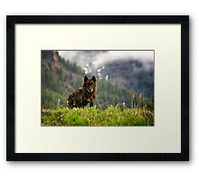 Black Wolf in Yellowstone National Park Framed Print