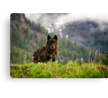 Black Wolf in Yellowstone National Park Canvas Print