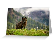 Black Wolf in Yellowstone National Park Greeting Card