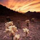 Phoenix Mountains Park and Preserve Sunset by cavaroc