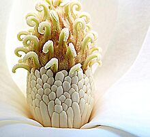 Prize Of Magnolia by Jean Gregory  Evans