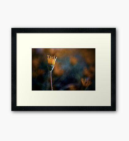 Single Orange Framed Print
