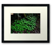 Lush and Green Framed Print