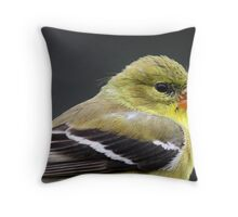Pretty damn good for ISO 1,000. Throw Pillow