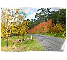 Autumn at King Valley Poster