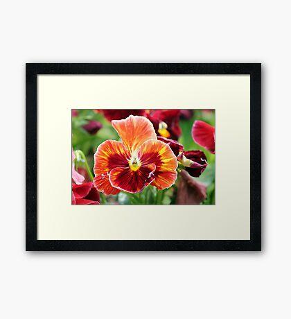 Flourishing Flowers Framed Print