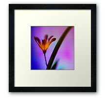 The Illuminated One Framed Print