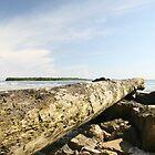 Marshall Islands Log/Rock Stack by Morgan Wade