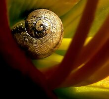 Tiny Snail Inside A Lily by paintingsheep