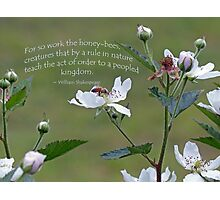 William Shakespeare saying Greeting Card Photographic Print