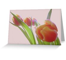 tulips Greeting Card