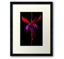Fuchsia #1 Framed Print
