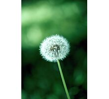 ~ lonely dandelion ~ Photographic Print