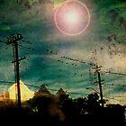 ~BIRDS~ by StarKatz