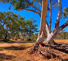 Dry River bed - Northern Territory by Hans Kawitzki