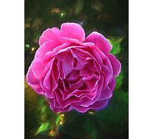 Positively Pretty Pink Rose Photographic Print