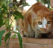 cat by bayu harsa