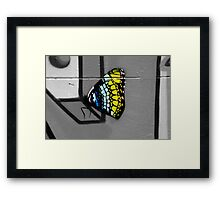 Urban Butterfly Framed Print