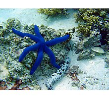 Blue Star Photographic Print
