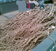 Kava Roots at Nadi market Fiji  by Camelot