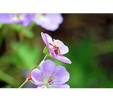 Bee Free Photographic Print