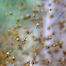 Arachno-nursery 1 by David Clarke