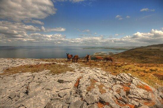 Burren Donkeys by John Quinn
