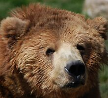 Kodiak Bear by Jonice
