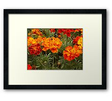 Perfectly ordinary Framed Print