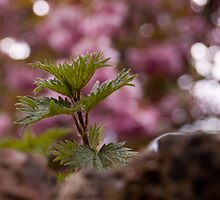 Bramble on wall, Bokeh by Alastair