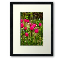 Tulips (Spring-Early May) Framed Print