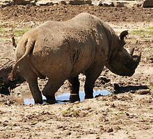 Rhino Foot Bath by Vincent von Frese