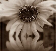 Reflection Of A Sunflower by SharonAHenson