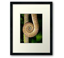Chameleon Tail Framed Print