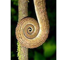 Chameleon Tail Photographic Print