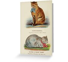 Cats Their Points and Characteristics Gordon Stables 1877 0506 Tortoiseshell, Silver or Blue Tabby Greeting Card