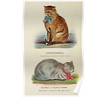 Cats Their Points and Characteristics Gordon Stables 1877 0506 Tortoiseshell, Silver or Blue Tabby Poster