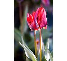 Simply Red Photographic Print