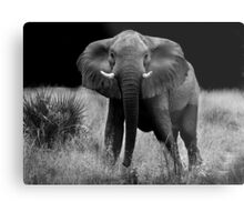 Don't mess with me! Metal Print