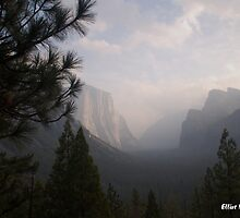 Foggy Morning in Yosemite  by Elliot MacDonald