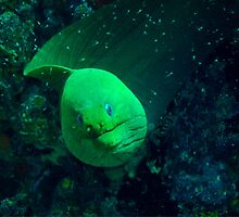 Green Moray by Robbie Labanowski