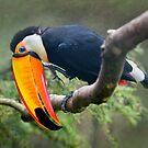 My Beautiful Beak by Krys Bailey
