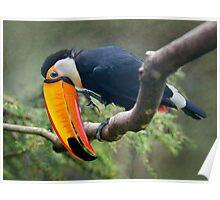 My Beautiful Beak Poster