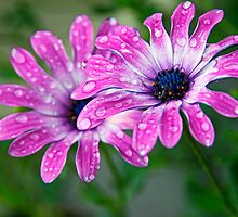 Rain drops keep falling on my head.... by Martina Fagan