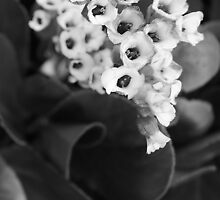 Blossoms in Monochrome by DavidBrainbow